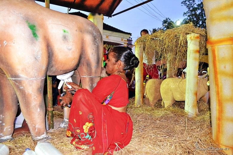 Viva Bonderam Festival, Divar Island Goa India